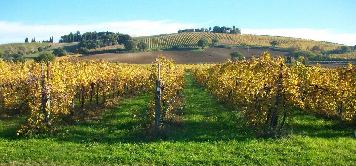 Intervista al viticoltore Paolo Francesconi